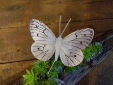 Pillangó betűzős 8x5
