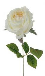 Rózsaszál krém  ø 10 x 42 cm